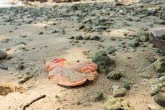Le foglie secche muoiono nella barriera corallina Fotografie Stock Libere da Diritti