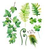 Le foglie selvagge dell'acquerello hanno messo isolato su fondo bianco Immagini Stock