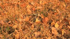 Le foglie si asciugano sulla terra archivi video