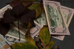 Le foglie sono dollari Dollari americani Fotografia Stock