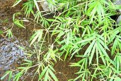 Le foglie sono sempreverdi Fotografia Stock Libera da Diritti