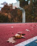 Le foglie stanno cadendo sul campo da pallacanestro immagini stock