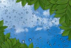 Le foglie su goccia dell'acqua su fondo lascia la struttura Fotografia Stock Libera da Diritti