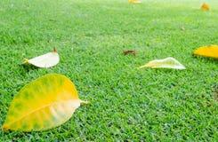 Le foglie sul prato inglese. Fotografia Stock
