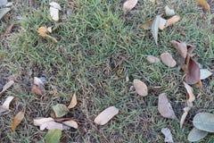 Le foglie sull'erba Fotografia Stock Libera da Diritti