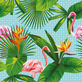 Le foglie tropicali ed il fondo senza cuciture del fenicottero dei fiori circondano Fotografie Stock Libere da Diritti