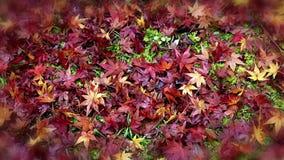 Le foglie variopinte in autunno fanno il giardinaggio nel telaio vago stock footage