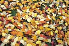 Le foglie variopinte riguardano il terreno Immagini Stock