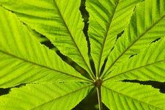 Le foglie verdi illustrano in dettaglio sui precedenti freschi della natura della foresta immagine stock