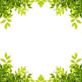 Le foglie verdi incorniciano isolato su bianco Immagine Stock Libera da Diritti