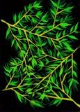 Le foglie verdi modellano con fondo nero Illustrazione di Stock