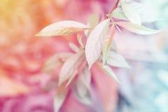 Le foglie verdi molli del fuoco con il filtro colorato pastello effettuano il abstrac fotografie stock libere da diritti