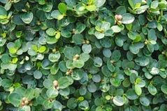 Le foglie verdi piantano dopo l'inondazione Immagine Stock Libera da Diritti