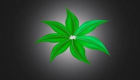 Le foglie verdi si collegano Fotografia Stock