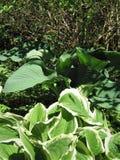 Le foglie verdi sono ospiti Fotografia Stock