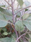 Le foglie verdi staccano la salute dal gambo germogliante immagine stock
