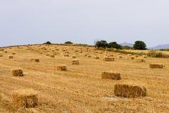 Le foin roule sur un champ agricole Photographie stock libre de droits