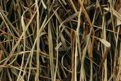 Le foin sec Les tiges Le fond Photos libres de droits