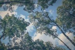 Le fond abstrait a composé des arbres, des nuages et d'un ciel bleu Images libres de droits