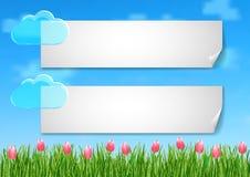 Le fond avec avec le ciel bleu, nuages, rose de fin d'herbe verte fleurit des tulipes Images stock