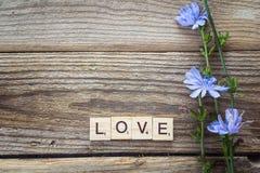 Le fond avec des fleurs de chicorée et une inscription aiment sur le Th Photos libres de droits
