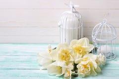 Le fond avec le ressort frais fleurit des tulipes et des jonquilles et c Photos stock