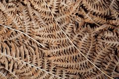 Le fond avec les modèles abstraits de sèchent des feuilles Texture de feuille naturelle dans la forêt Images libres de droits