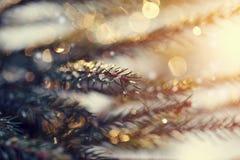 Le fond avec les petits morceaux de scintillement de glace sur le sapin s'embranche Photos libres de droits