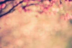 Le fond brouillé d'abrégé sur vintage des fleurs de cerisier roses fleurit Photographie stock libre de droits