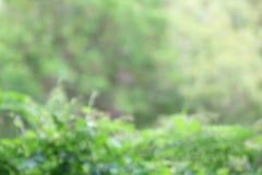 Le fond brouillé par arbre abstrait, le vert forêt brouillé beaux deux de fond d'arbre a modifié la tonalité la nature molle photo stock
