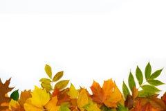 Le fond coloré de feuilles Photos libres de droits
