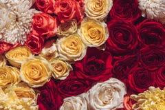 Le fond coloré naturel de roses, se ferment vers le haut de la vue supérieure La floraison de ressort s'abaisse photo stock