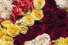 Le fond coloré naturel de roses, se ferment vers le haut de la vue supérieure La floraison de ressort s'abaisse images stock