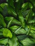 Le fond créatif a fait les feuilles vertes photos stock