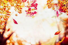 Le fond d'automne avec la chute part aux arbres de paysage à la lumière du soleil avec le bokeh photos stock