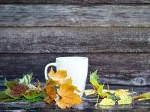 Le fond d'automne avec les feuilles sèches, tasse blanche avec la boisson, pluie chute sur le banc de brun foncé Copiez l'espace, photographie stock libre de droits
