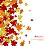 le fond d'automne part du blanc Images stock
