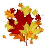 le fond d'automne part du blanc Images libres de droits