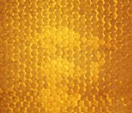 Le fond d'or des nids d'abeilles d'abeille a rempli de collant doux ho photo libre de droits