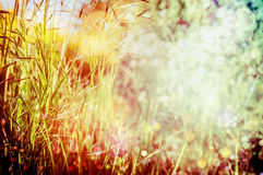 Le fond d'herbe d'été ou d'automne, se ferment  photographie stock libre de droits