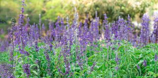 Le fond d'image des fleurs colorées, fleurs colorées photos libres de droits