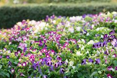 Le fond d'image des fleurs colorées, fleurs colorées photographie stock