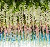 Le fond d'image floral avec le ressort coloré de floraison d'été fleurit et le vert laisse venir de jusqu'à vers le bas Photo stock