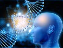 le fond 3D médical avec le brin d'ADN et le mâle se dirigent Image stock