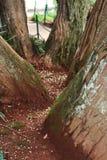 Le fond de divergence d'arbres photographie stock