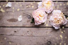 Le fond de fête avec les pivoines roses fleurit sur l'étiquette en bois âgée Image stock