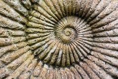 Le fond de l'ammonite fossile dans une pierre Photo libre de droits