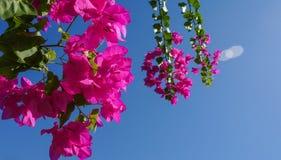 Le fond de l'en-tête ou de la feuille protectrice des vacances d'horticulture ou d'été Image stock