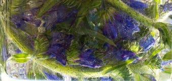 Le fond de la fleur bleue avec le vert laisse congelé en glace Images libres de droits