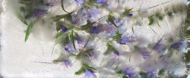 Le fond de la fleur bleue avec le vert laisse congelé en glace Photographie stock